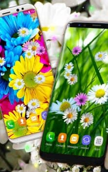 Live Wallpaper 3D Daisy Spring Field Themes скриншот 2