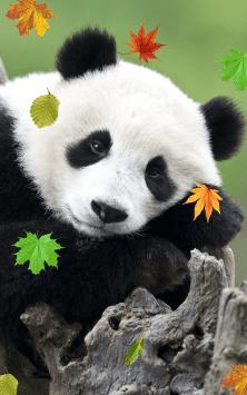 Panda скриншот 4