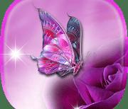 Бабочки logo