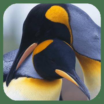 Пингвины 3D logo