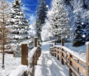 Зимние пейзажи logo