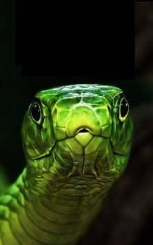 Змея скриншот 2