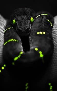 Змея скриншот 3