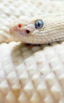 Змея скриншот 5