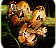 Змея logo