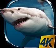 Акула 4К logo