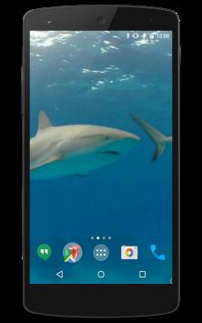 Акулы видео скриншот 2