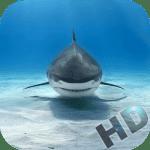 Акулы видео
