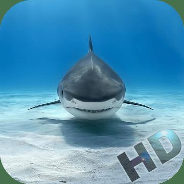 Акулы видео logo