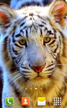 Белый Тигр скриншот 3