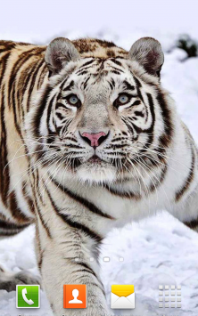 Белый Тигр скриншот 4