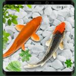 KOI рыбы живые обои HD
