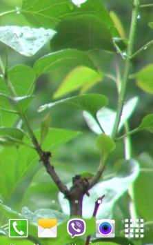 Ливень Видео скриншот 4
