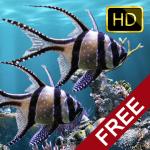 Настоящий аквариум – HD