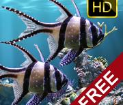 Настоящий аквариум – HD logo