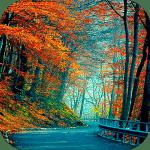 Осень - темы и живые обои 3d