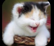 Смешные кошки logo