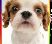 Собака обнюхивает экран logo