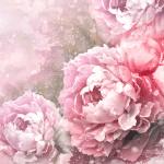Винтаж розы