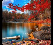 Осень акварель logo