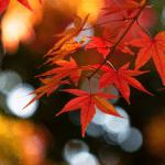 Осенние Live Wallpaper