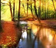 Осенний лес logo