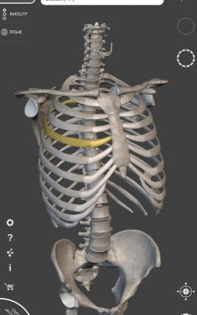 Скелет | 3D Анатомии скриншот 1