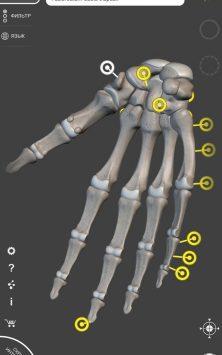 Скелет | 3D Анатомии скриншот 2
