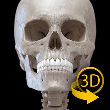 Скелет | 3D Анатомии logo