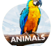 Животные logo