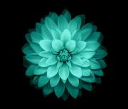 Galaxy цветы logo