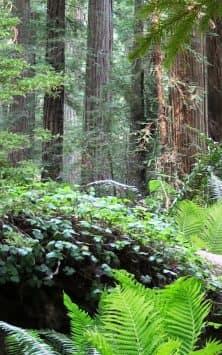 Лес видео скриншот 2