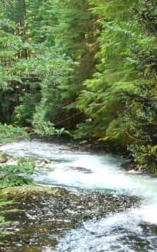 Лес видео скриншот 4