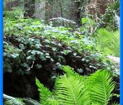 Лес видео logo