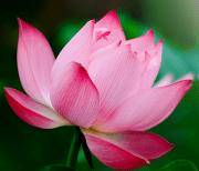 Тропические цветы logo