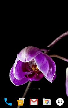 Цветы Видео скриншот 4