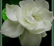 Цветы Видео logo
