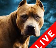 Бойцовские собаки logo
