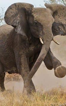 Дикие животные живые обои и темы скриншот 4
