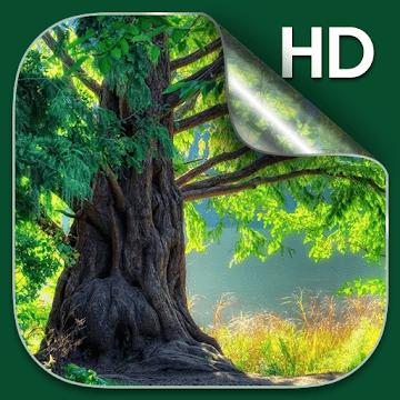 Лес живые обои HD logo
