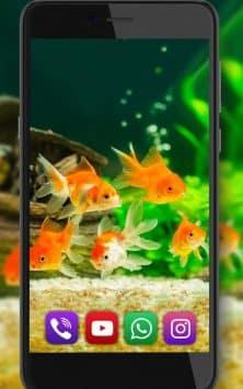 Аквариум Золотой Рыбки скриншот 3