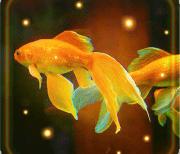 Аквариум Золотой Рыбки logo