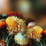 Осенние Цветы живые обои