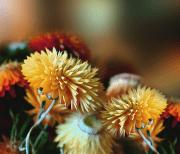 Осенние Цветы logo