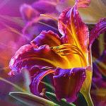 Цветы живые обои