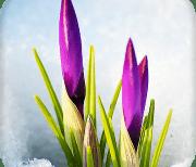 Весна живые обои 3d и темы logo