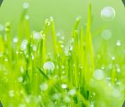 Трава logo