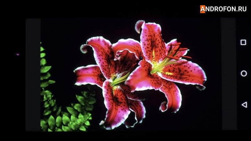Фото экрана Motorola Цветок