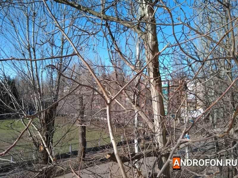 Фото кроны деревьев.