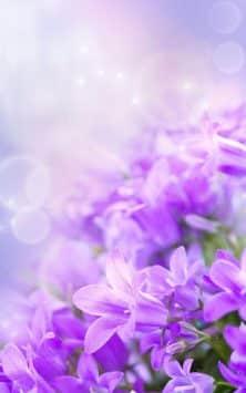 Нежные цветы скриншот 1